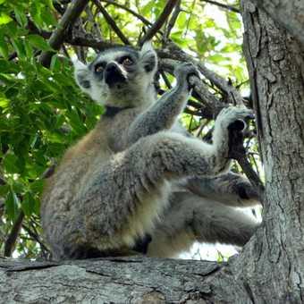 Madagascar bee eater