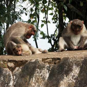 Common monkeys beside the road