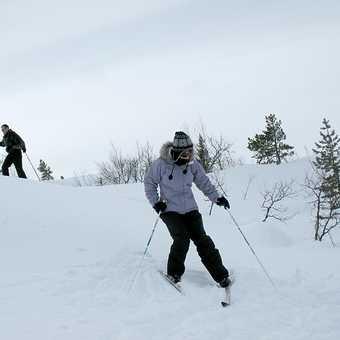 Soft snow - one of Ilse's photos