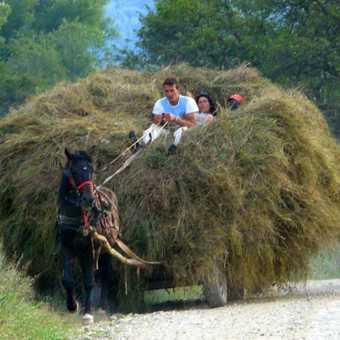 Barn & Haystacks