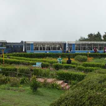 Toy train in the flower garden