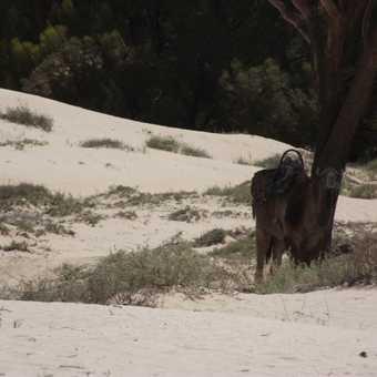 The Shade in Sahara