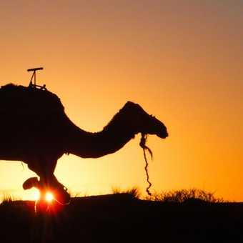 Saharan Sunrise 3