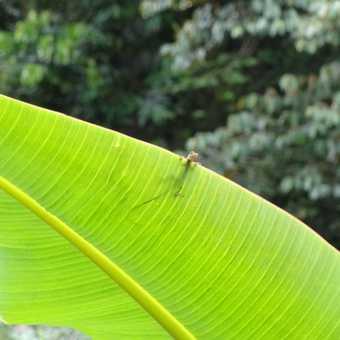Little tiny lizard