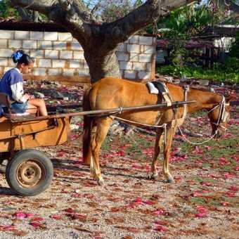 Girl and Horse and Cart