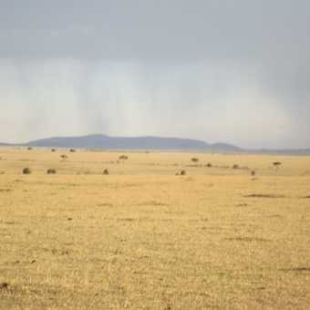 rolling savana of the masia mara with rain in the back