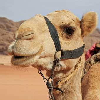 Thanks for the ride..Wadi Rum