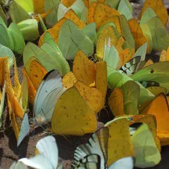 Butterflies everywhere
