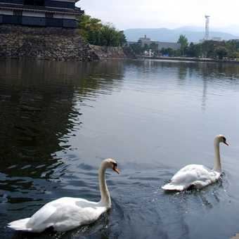 Crow Castle, Matsumoto