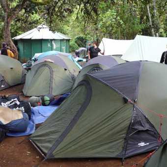 lemosho forest camp