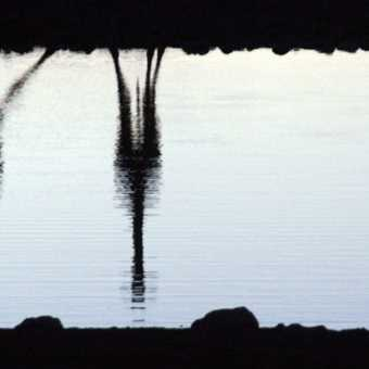 Giraffe reflections at Okaukuejo drinking