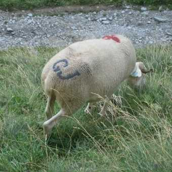 Day 5: Who owns these sheep, JG?
