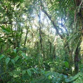 Santa Elena Cloud Forest Reserve