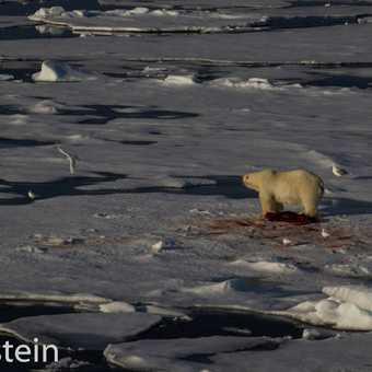 Polar Photographic charter 2013