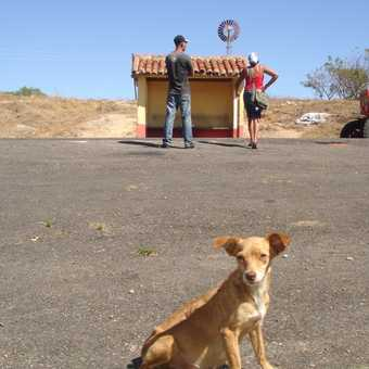A dog and a bus stop.