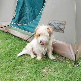 Kembu ... my tent and my new friend (the dog previously known as Buster)