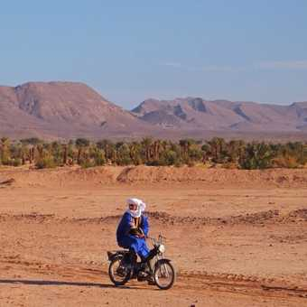 The two-wheeled camel