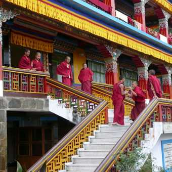 The monks at Rumtek Monastery