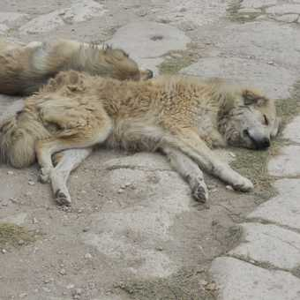 homeless dogs