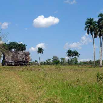 Cuban rural life