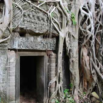 Ta Prohm shrouded doorway