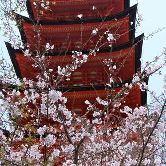Pagoda, Miyajima Island