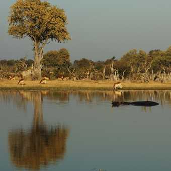 morning reflections Hippo Pools