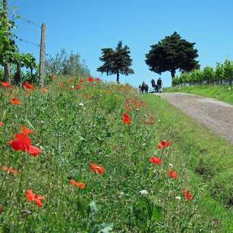 Tuscany 22