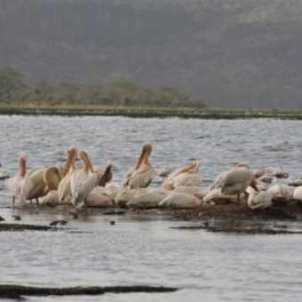 Stop splashing -Lake Nakuru
