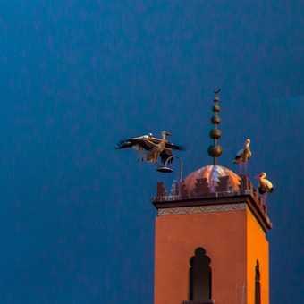 Marrakech - Stop!