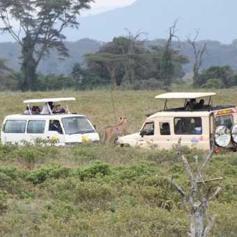 Black Rhino, Lake Nakuru