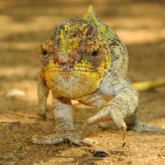Lizard in reptile farm
