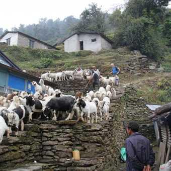 Rush hour traffic Nepal style