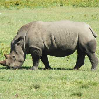 Lake Nakuru .... so many rhinos!