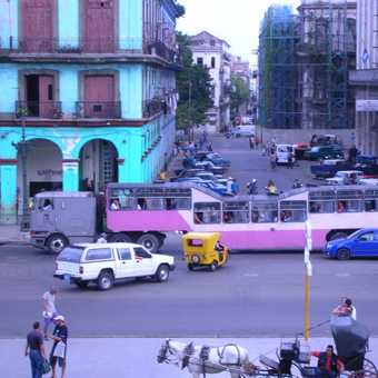 The Camels of Havana