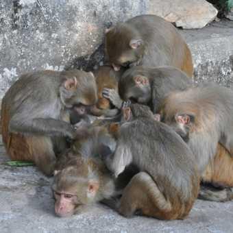 Monkeys at the monkey temple