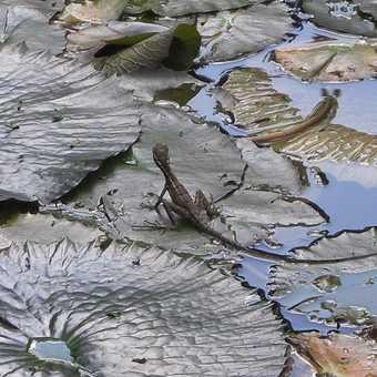 Wildlife at the Esquinas Rainforest Lodge (Golfito)
