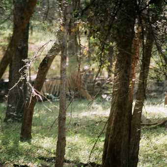 Spot the Tiger!
