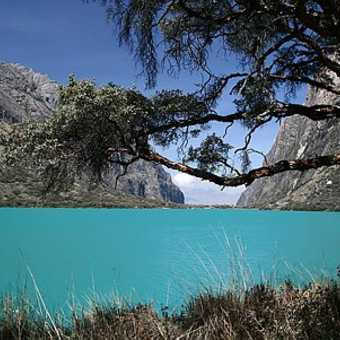 Glacial water lake and Polylepis tree