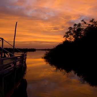 Mangroves, Sine-Saloum Delta
