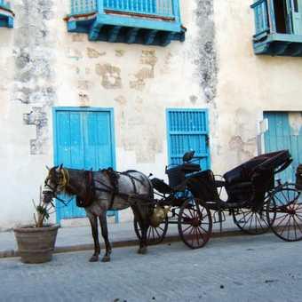 horses in Havana street