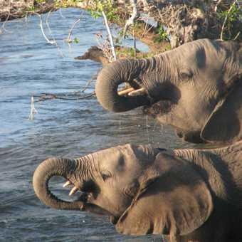 Elephant Trail Zambia