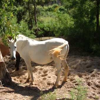 Horses by Algamitas river