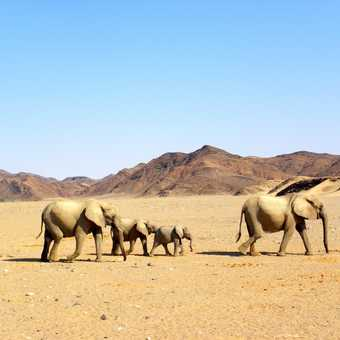 Desert Elephant Watering Hole in the Palmwag Concession 2