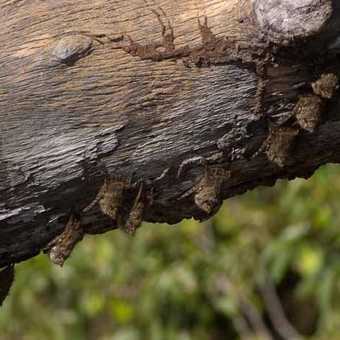Bats roosting at lake