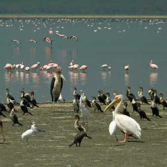 Nakuru birds