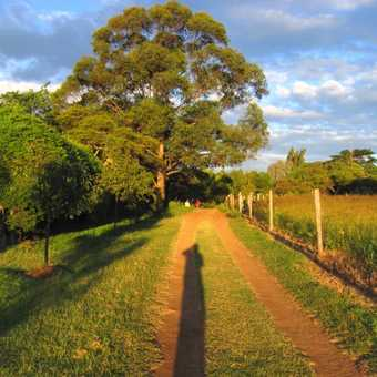 long shadow & oak