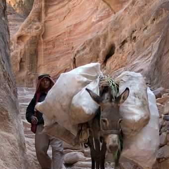 Petra - donkey-jam on the climb