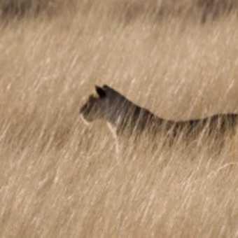 Etosha, National Park