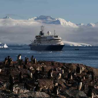 Penguins admiring the Sea Spirit